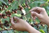 Agropecuária tem maior criação de empregos no quadrimestre em 10 anos | Foto: Divulgação