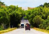 Linha Verde: fluxo de veículos tem aumento no feriado   Divulgação   CLN
