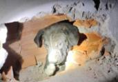 Filhote de pit bull preso entre paredes é resgatado | Divulgação | CBMBA