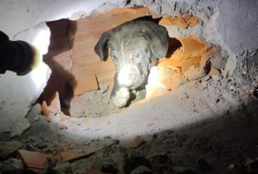 Filhote de pit bull preso entre paredes é resgatado por bombeiros