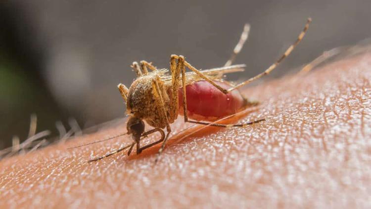 A doença, transmitida pelo mosquito Anopheles, matou mais de 400 mil pessoas em 2019 | Foto: Reprodução - Foto: Reprodução