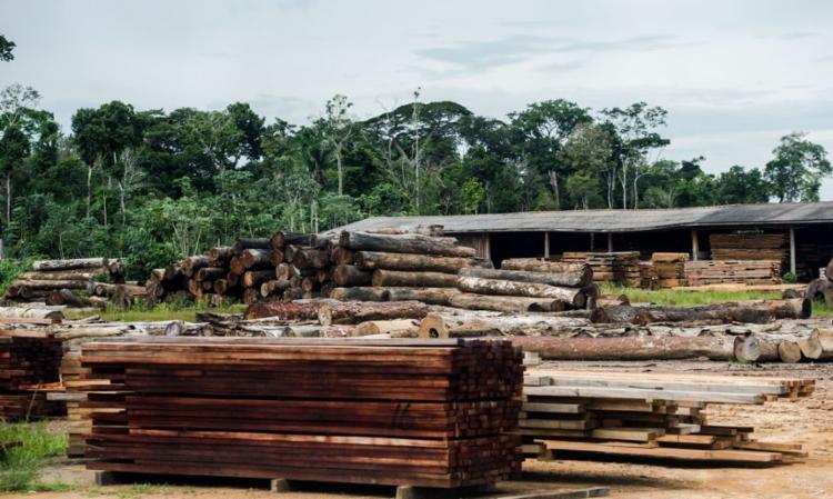 Máquina, criada pelo Serviço Florestal Brasileiro, recebe patente | Foto: Marcelo Camargo | Agência Brasil - Foto: Marcelo Camargo | Agência Brasil