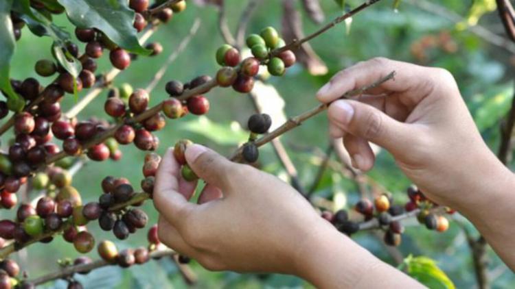 O café foi uma das atividades que mais contribuiu para o bom resultado de abril - Foto: Divulgação