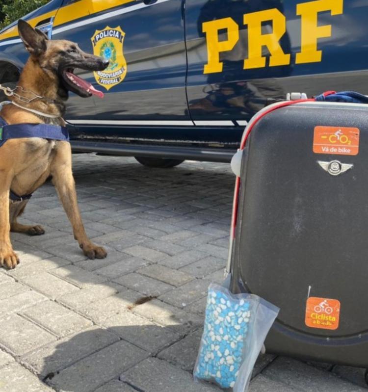 Cão farejador sinalizou que havia droga dentro de uma mala | Foto: Divulgação | PRF - Foto: Divulgação | PRF