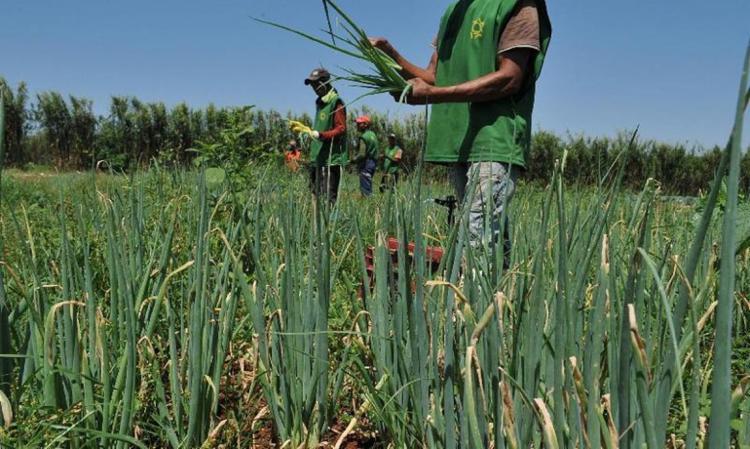 Trabalhadores da agricultura - Foto: Valter Campanato I Agência Brasil