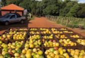 Bahia é segundo produtor e exportador de frutas frescas do país | Foto: Divulgação