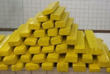 Mais de 40 kg de maconha são apreendidos em ponto de distribuição em Salvador | Divulgação | SSP-BA