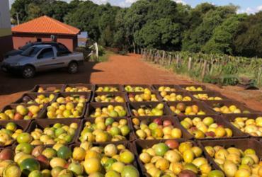Bahia é segundo produtor e exportador de frutas frescas do país | Divulgação