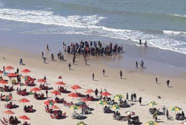Novo ataque de tubarão é registrado em praia de Pernambuco | Divulgação