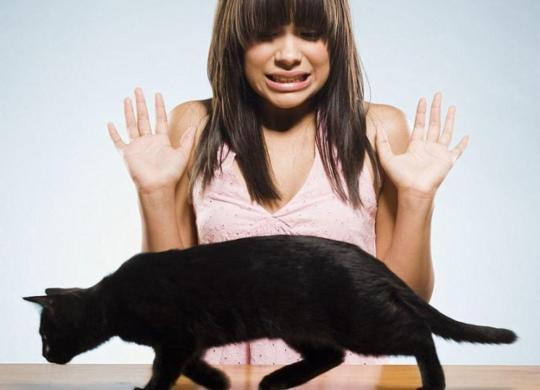 Zoofobia é considerada algo 'natural', mas deve ser tratada | Divulgação