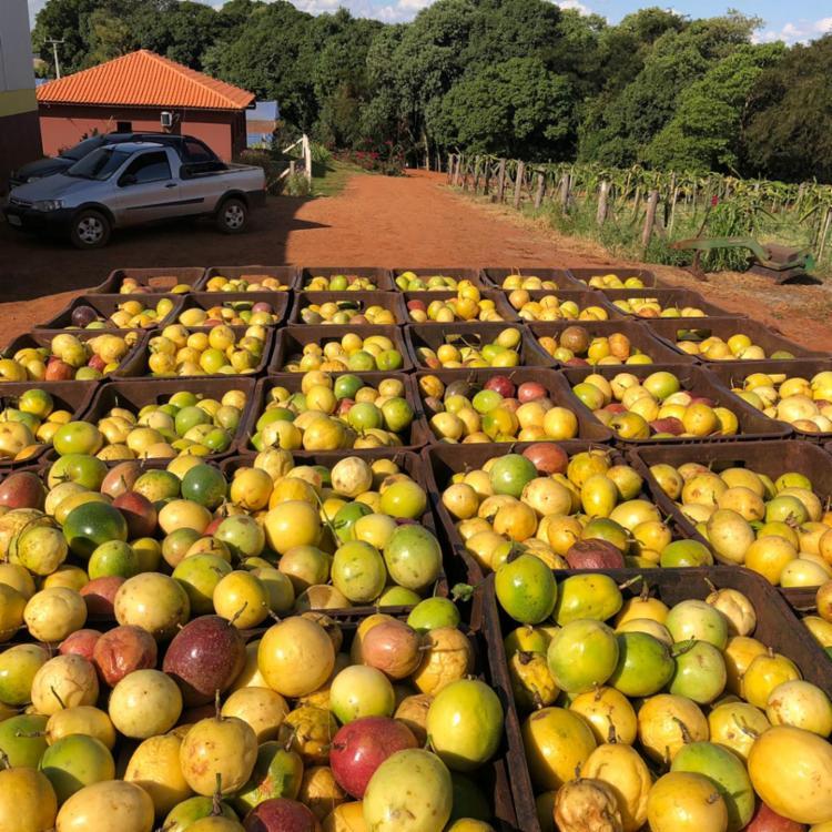 Fruticultura vem mostrando ser uma das maiores vocações agrícolas da Bahia - Foto: Divulgação