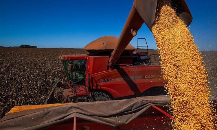 Produção deste ano deve ser 1,7% superior à de 2020 | Foto: Wenderson Araújo | CNA - Foto: Wenderson Araújo | CNA