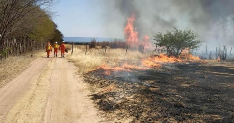 Iniciado no povoado de Vereda, o fogo se espalhou para as margens BA-160, à altura do Km 10, e tomou grandes proporções. - Foto: SSP-BA/Divulgalção