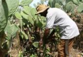 SDR, Abapa, Aiba: exemplos alem de plantar e colher | Foto: Joá Souza | Ag. A TARDE