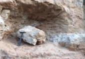 Fóssil de dinossauro é encontrado no interior de SP | Foto: