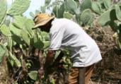SDR, Abapa, Aiba: exemplos alem de plantar e colher | Joá Souza | Ag. A TARDE