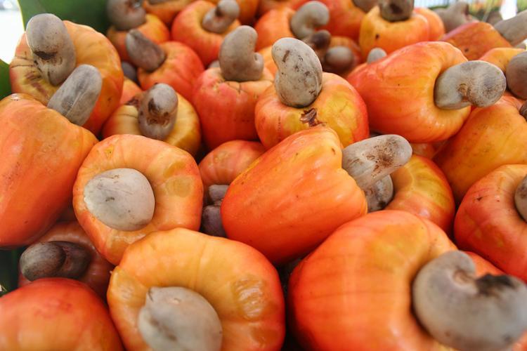 Caju é uma fruta nordestina rica em vitamina C e zinco | Foto: Jorge Sabino | Divulgação - Foto: Jorge Sabino | Divulgação