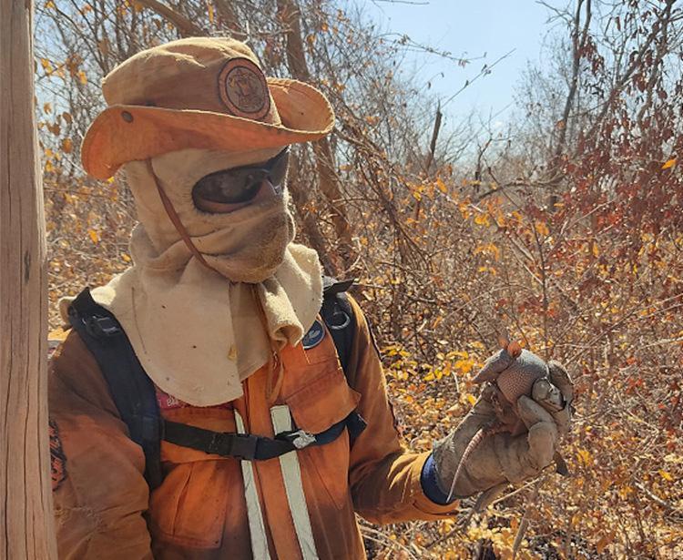 Dois casos no extremo norte da Bahia detinham a atenção das equipes de combate   Foto: Operação Florestal   Divulgação - Foto: Operação Florestal   Divulgação