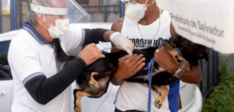 Estima-se que cerca de 180 mil animais sejam imunizados na estratégia   Foto: Jefferson Peixoto   Secom PMS - Foto: Jefferson Peixoto   Secom PMS