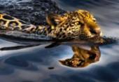 Campanha Artistas pelo Pantanal arrecada mais de R$ 2 milhões para combate aos incêndios | Foto: Araquém Alcântara/Divulgação