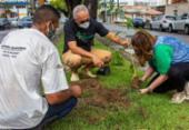 Criador de projeto ambiental alerta para a necessidade de mais árvores nos espaços urbanos | Foto: Divulgação/Projeto Tá Faltando Árvore