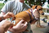 Campanha de vacinação antirrábica é prorrogada em Salvador | Foto: Agência Brasil