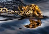 Campanha Artistas pelo Pantanal arrecada R$ 2 milhões | Araquém Alcântara/Divulgação