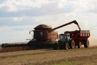 Agricultura baiana gera R$ 27,5 bi em 2020 e tem melhor resultado em 26 anos   Divulgação/Aiba