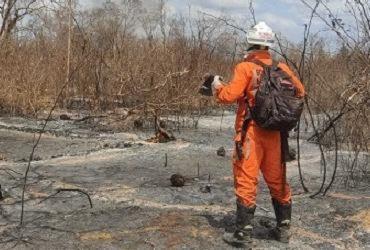 Operação combate incêndios florestais em 14 municípios | Divulgação | GOV BA