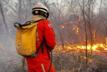 Lençóis: bombeiros e brigadistas controlam incêndio