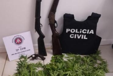 Polícia apreende 25 pés de maconha em Maraú