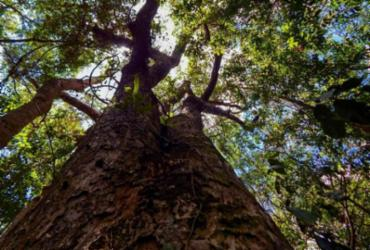 Sete novas unidades de preservação da fauna e flora silvestres foram implantadas na Caatinga e Mata Atlântica