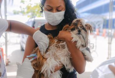 Vacinação contra a raiva em cães e gatos em Salvador entra na última semana | Igor Santos/ Divulgação