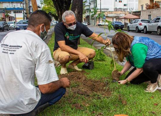 Criador de projeto ambiental alerta para a necessidade de mais árvores nos espaços urbanos | Divulgação/Projeto Tá Faltando Árvore