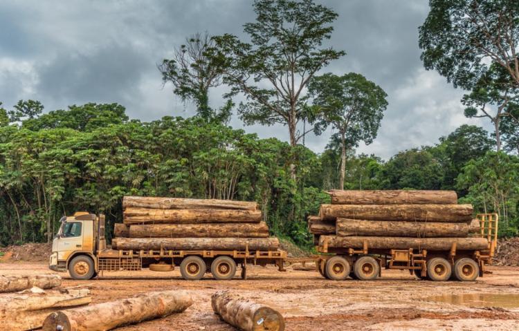 A exploração madeireira na Amazônia foi monitorada através de imagens de satélites | Foto: Vicente Sampaio | Imaflora - Foto: Vicente Sampaio | Imaflora