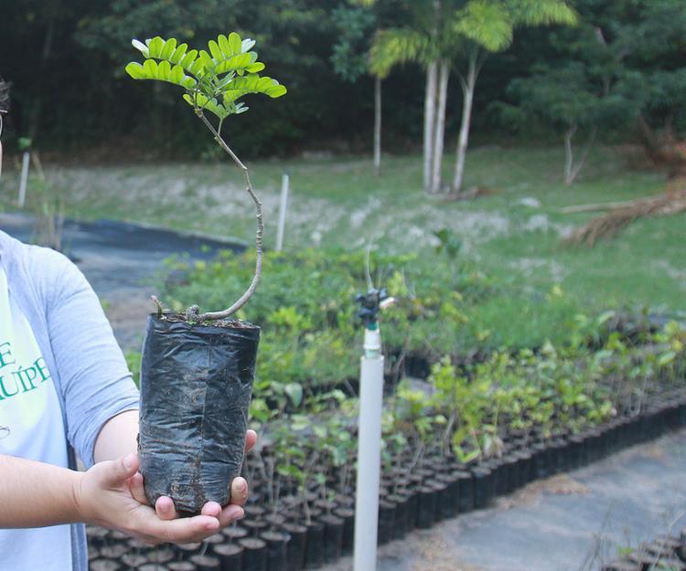 O Bahia Florestal 2021 consiste em relatório confiável sobre o potencial do estado para atração de empreendimentos sustentáveis | Foto: - Foto: Tiago Caldas | Ag. A TARDE | 20.9.2018