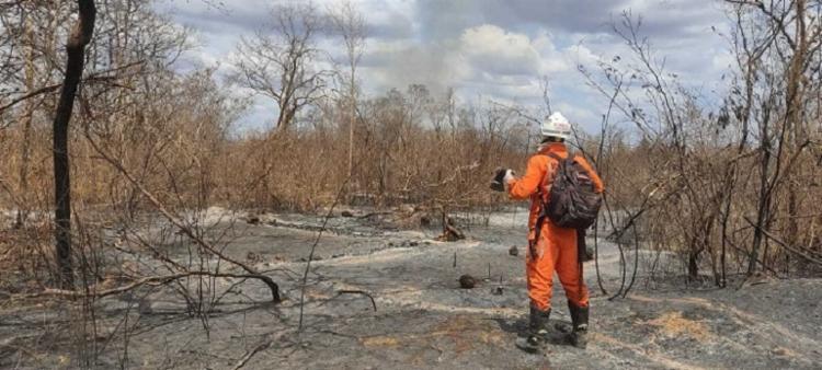 Programa Bahia sem Fogo conta com 148 bombeiros, oito aeronaves modelo Air Tractor e brigadistas voluntários | Foto: Divulgação | GOV BA - Foto: Divulgação | GOV BA