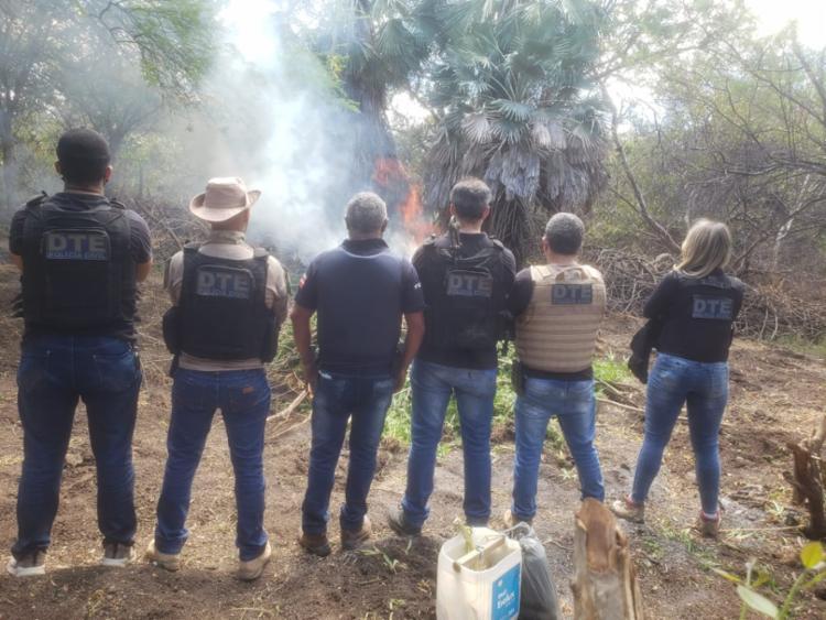 A plantação foi localizada quando já estava pronta para colheita | Foto: Divulgação | Polícia Civil - Foto: Divulgação | Polícia Civil