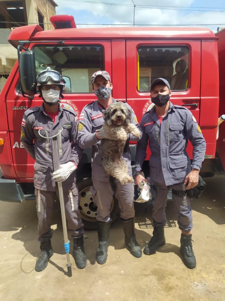 Após o resgate, o animal foi avaliado e estava sem ferimentos aparentes   foto: Divulgação   CBMBA - Foto: Divulgação   CBMBA