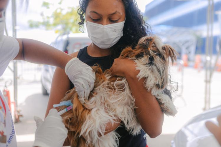 Devem ser imunizados cães e gatos a partir dos três meses de idade   Foto: Igor Santos/ Divulgação - Foto: Igor Santos/ Divulgação