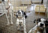 Bolsonaro sanciona lei que proíbe eutanásia de cães e gatos de rua | Foto: Fábio Rodrigues Pozzebom | Agência Brasil
