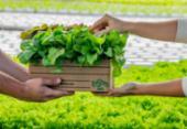 Salvador ganha primeira fazenda urbana nesta quarta | Foto: Divulgação