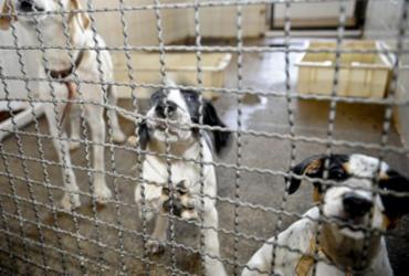 Bolsonaro sanciona lei que proíbe eutanásia de cães e gatos de rua | Fábio Rodrigues Pozzebom | Agência Brasil