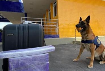Com auxílio de cão farejador, PRF encontra maconha levada em ônibus na BR-116