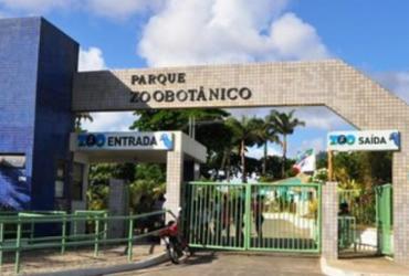 Zoológico de Salvador volta a funcionar a partir desta terça | Divulgação | Zoológico de Salvador